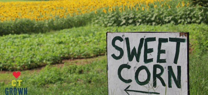sign that says sweet corn