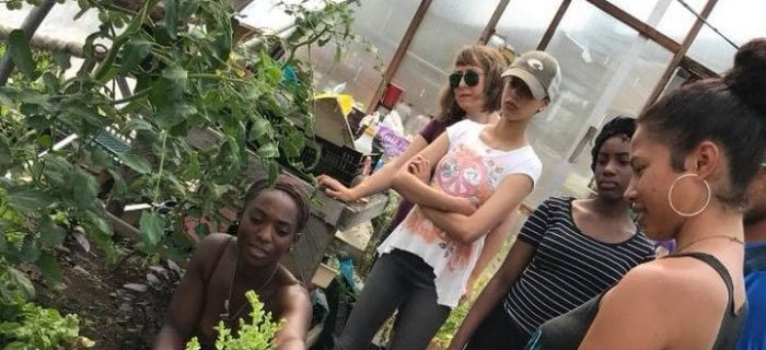 teenagers looking at plants in a greenhouse