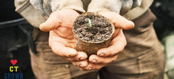 seedling being held in a farmer's hand