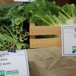 celery and fennel bunches for sale