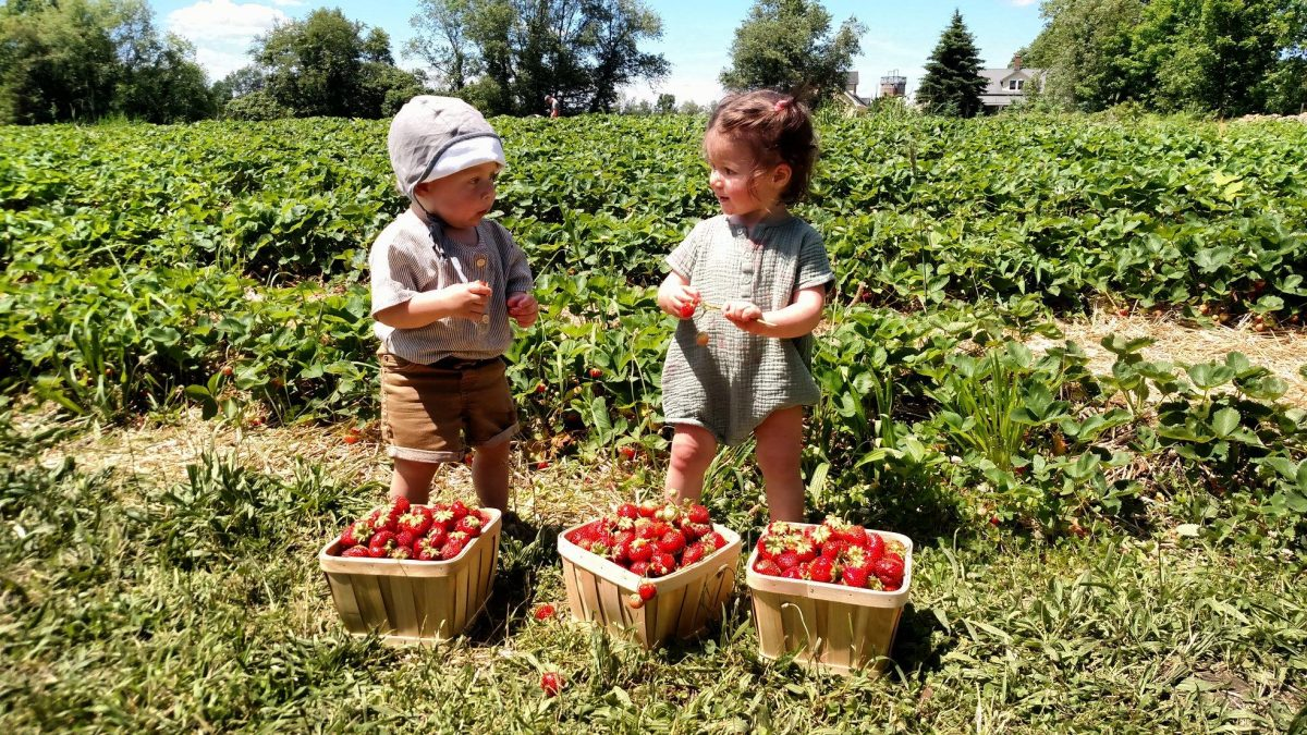 two toddlers with baskets of fresh picked strawberries