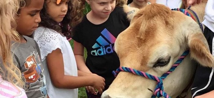 a group of kids petting a cow