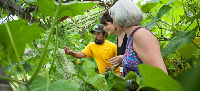 Man showing 2 woman how squash grow from trellis