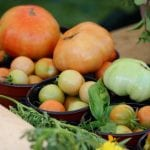 underripe tomatoes in pots