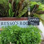 swiss chard and parsley for sale