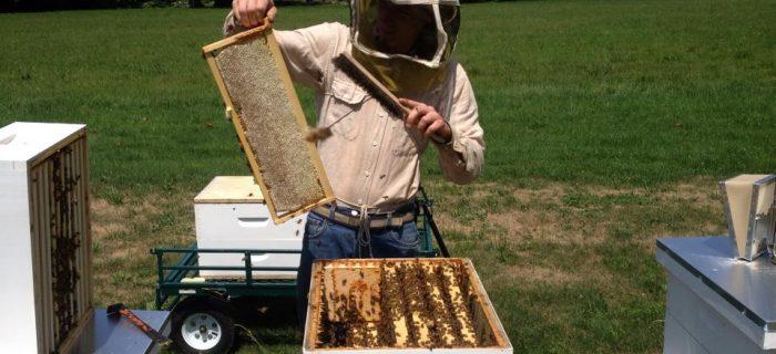 man inspecting beehive