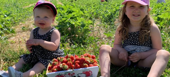 toddler and lit girl sitting with box of strawberries between them