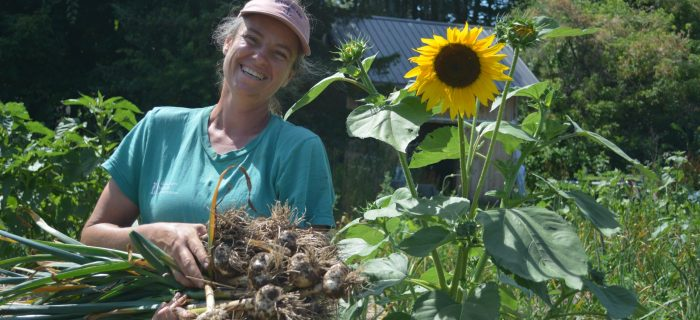 woman holding a lot of harvested garlic next to sunflower