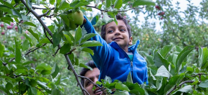 boy picking an apple