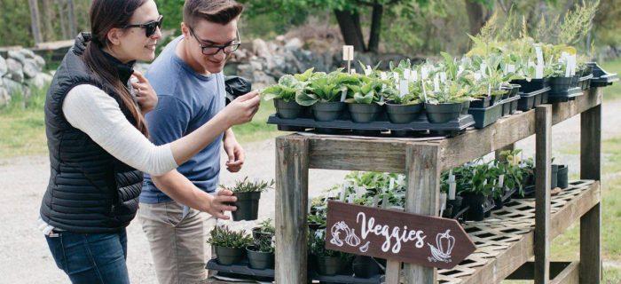 man and woman looking at vegetable seedlings