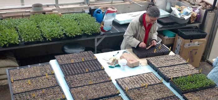 farmers starting seeds in trays