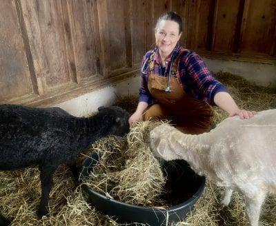 Woman with sheep in stall